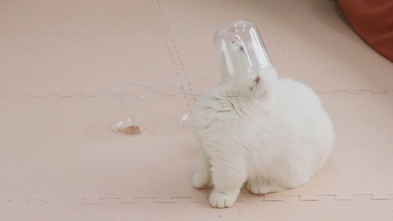 Funny Cat Find Food In The Cup #shorts