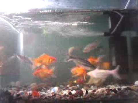 K.Elango my fish tank