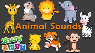Animal Sound Songs   Animal Sounds for babies & Childrens   Busy Bees Nursery Rhymes & Kids Songs screenshot 2