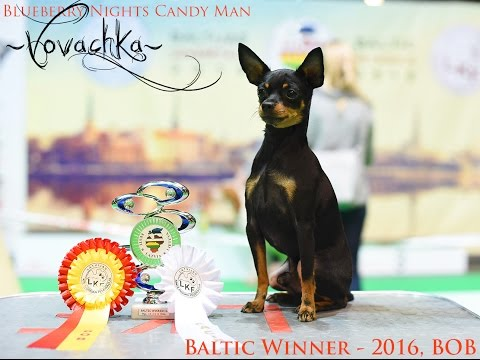 Baltic Winner 2016 - Russkiy toy / Балтик Виннер 2016 - Русский той