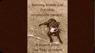 Staffordshire Bull Terrier Discrimination.wmv