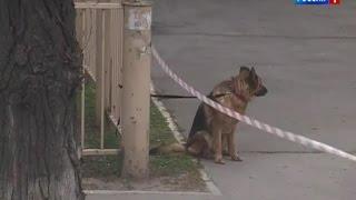 Информация о взрывных устройствах на двух улицах Ростова не подтвердилась