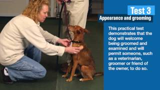 Akc Canine Good Citizen Tests 2 And 3