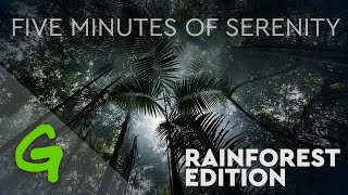 Five Minutes of Serenity: Rainforests Edition