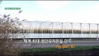 미래농업 스마트팜 [애그리포트 A7첨단 유리온실단지]