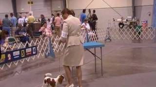 Cavalier King Charles Spaniel Yosie's Second Show In Perry 09
