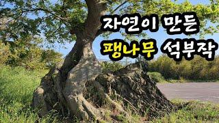 자연이 만든 팽나무 석부작