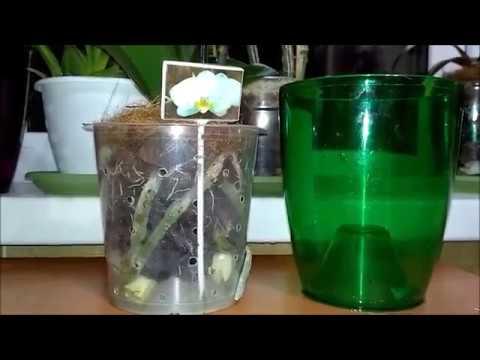 Горшки для орхидей с дырочками...Плюсы и минусы