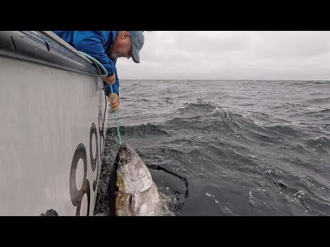 10 Reasons Why To Take A Fishing Charter