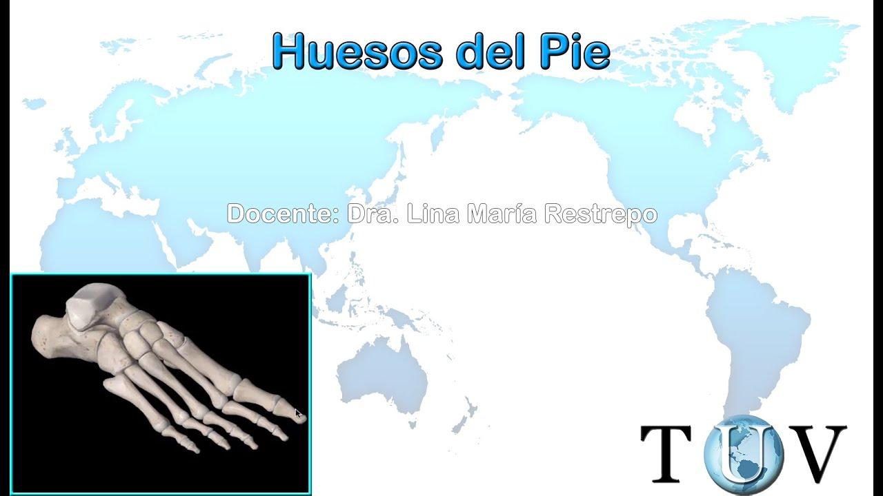 Huesos del miembro inferior (Pie) - Anatomía del cuerpo humano - YouTube