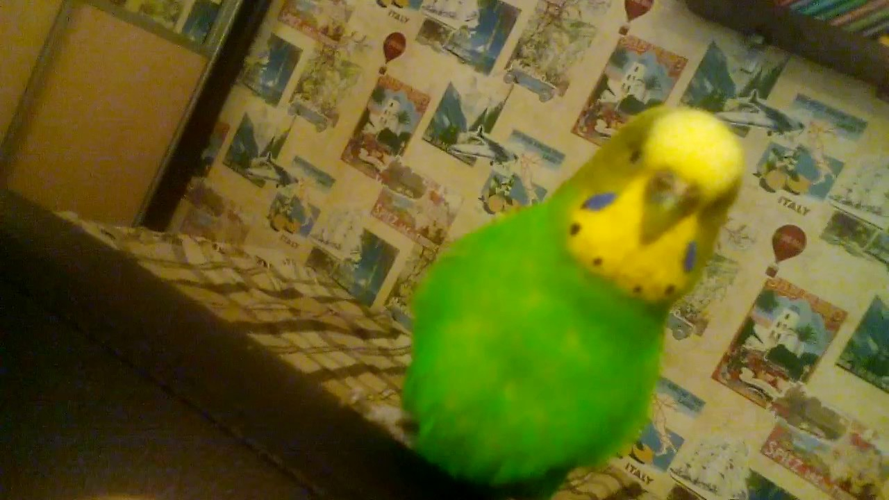 parrot game with finger - YouTube
