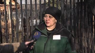 Медвежата родились у гималайских медведей в Читинском городском зоопарке