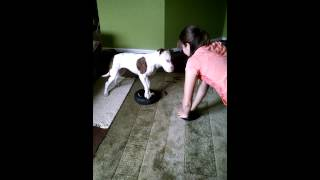 Kristi And Rebel The American Pit Bull Terrier Exercise Video!