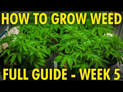 The Importance of Proper PH - Cannabis Grow Guide Week 5