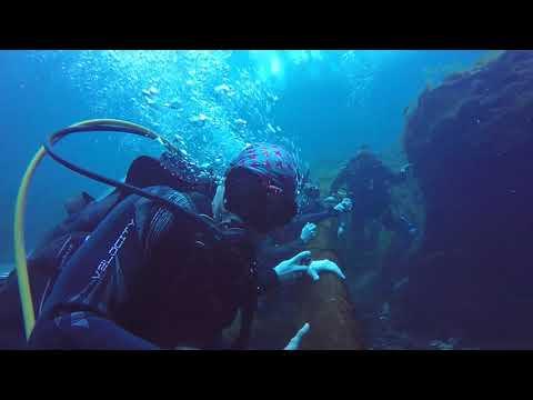 Manatee Springs Diving