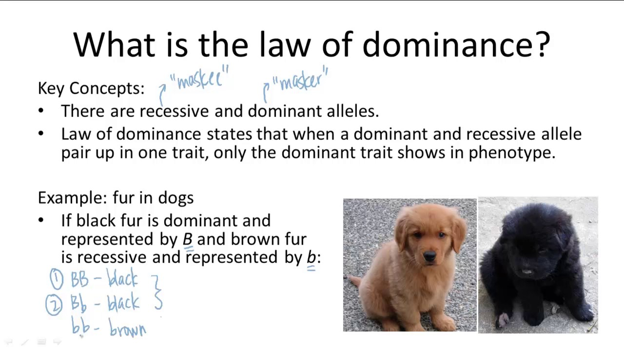 What is the dominant