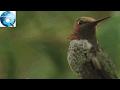Loài chim có khả năng kỳ diệu: Lắc đầu một cái là màu lông thay đổi
