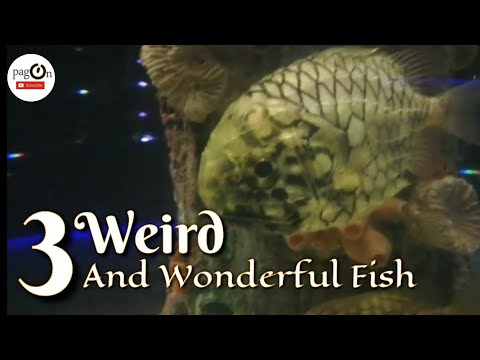 3 Weird And Wonderful Fish