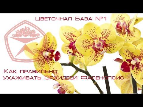 Цветочная База №1 - Как ухаживать за Орхидеей Фаленопсис