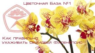 Цветочная База №1 - Как ухаживать за Орхидеей Фаленопсис(В данном видео мы расскажем вам, как правильно ухаживать за Фаленопсисом! Фаленопсис – многолетнее растен..., 2016-06-27T16:01:04.000Z)