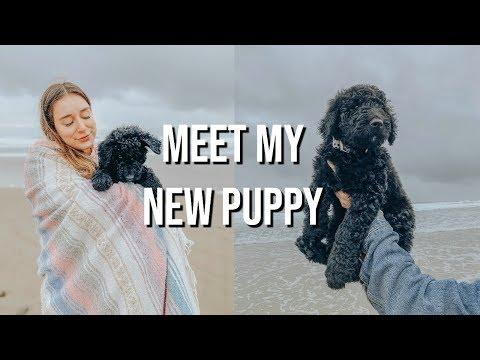 my-new-puppy!-|-vlog