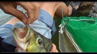 Câu cá giải trí - cao thủ câu cá cầu Mã Đà