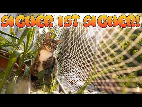 Balkon Katzensicher machen | Besuch beim Dampfastore