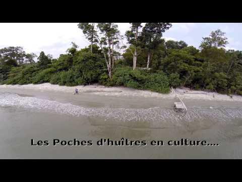 Les Huitres du Gabon