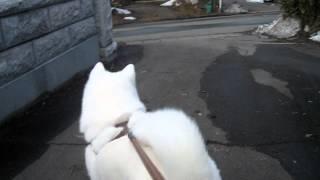 お散歩を終えておウチの前でゆっくりするげんきと飼い主、そこへ賑やか...
