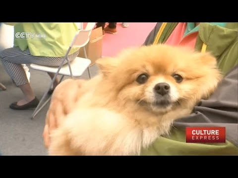 three@five : Pet care business booming in China