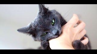 Почему  кошка  вас  кусает?