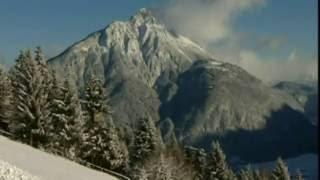 Suncokret - Pada prvi sneg