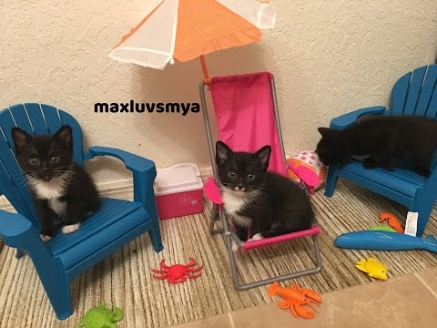 Foster Kittens and the Beach! Tiny Kittens with 18 inch Doll Toys!