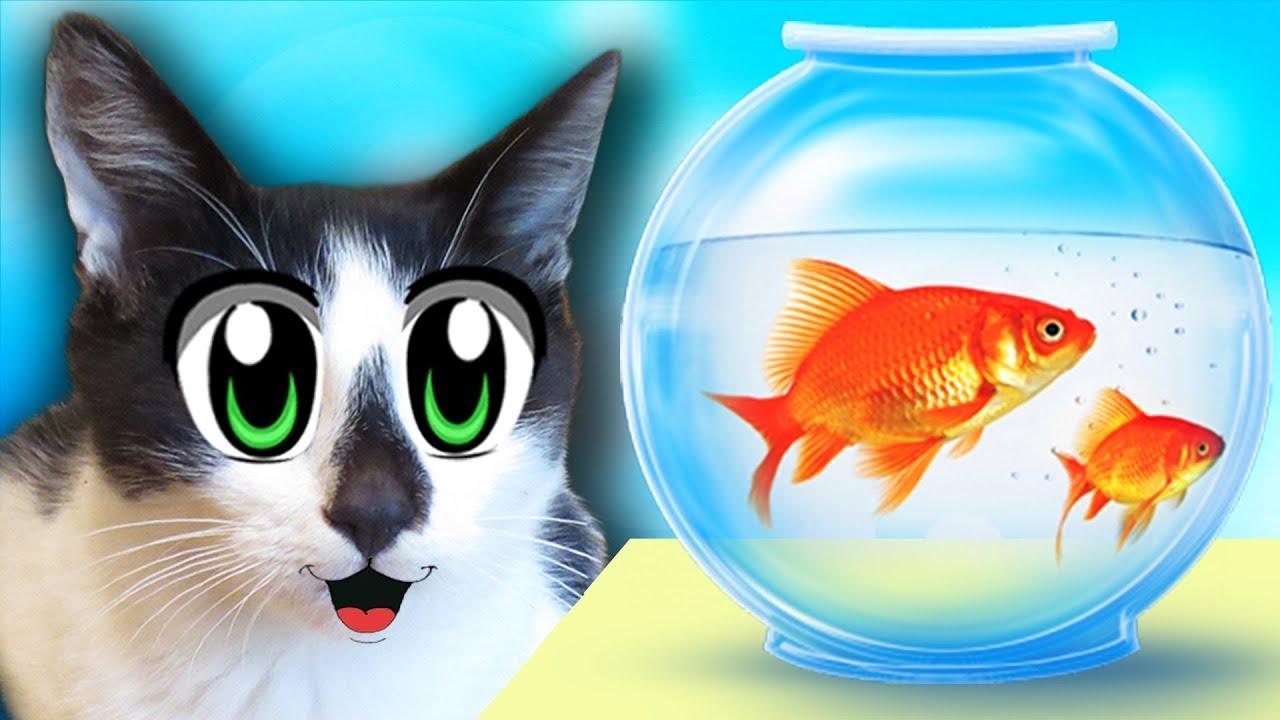ЧЕЛЛЕНДЖ НАЙДИ КОЛБАСКУ! СМЕШНЫЕ коты МАЛЫШ и Кошка МУРКА! НОВЫЕ
