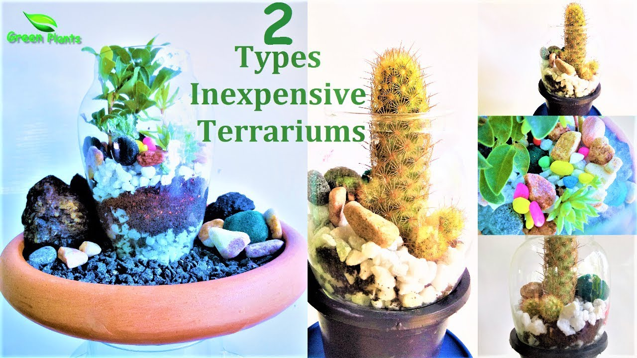 How To Make Inexpensive Terrarium Make Low Budget Terrarium Garden