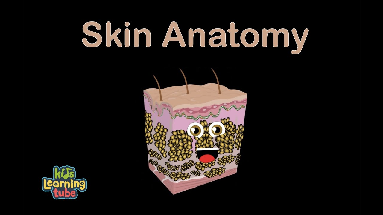 Skin Anatomy Song For Kids Children Youtube Basic Parts Of The Eye Diagram
