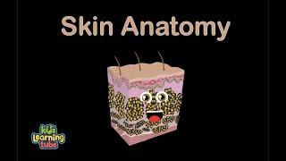 Skin Anatomy Song for Kids/Skin Song for Children/Skin Anatomy