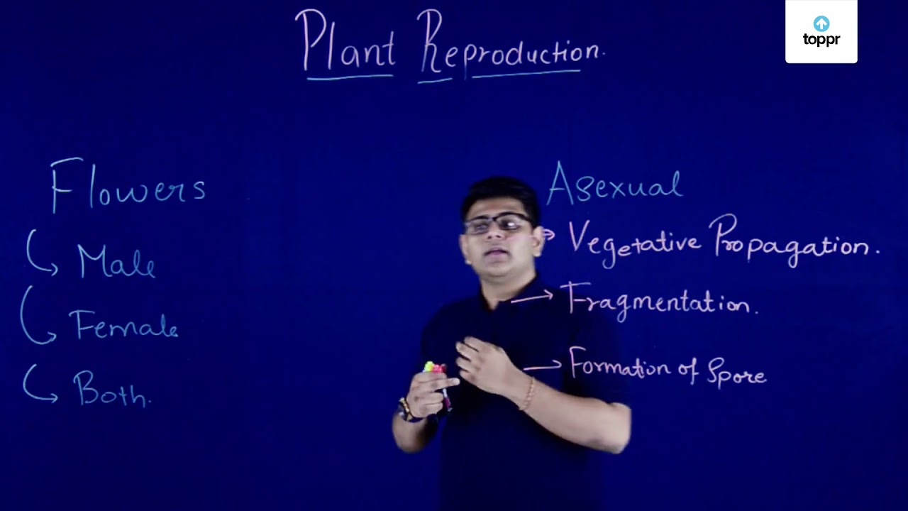 Vegetative Propagation: Meaning, Types, Budding, Grafting