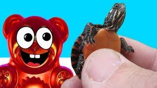Baby Schildkröten und Aquarium für Lucky Bär die Nervensäge