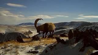 Новые фильмы о природе от Ивана и Светланы Усановых  (2016 11 02 Панорама Недели)