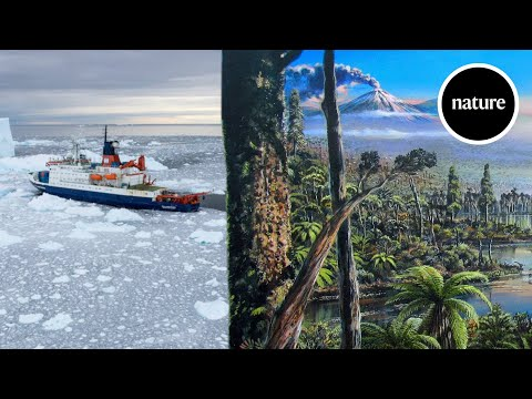 An ancient Antarctic rainforest