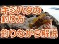 ロックフィッシュ初心者へ!根魚の釣り方を、実際に釣りながら説明します!(ジカリグ編)