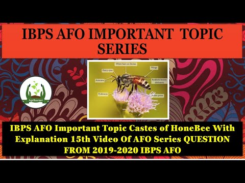 IBPS AFO Important Topic Castes of Honey Bee With Explanation 15th Video Of AFO Series