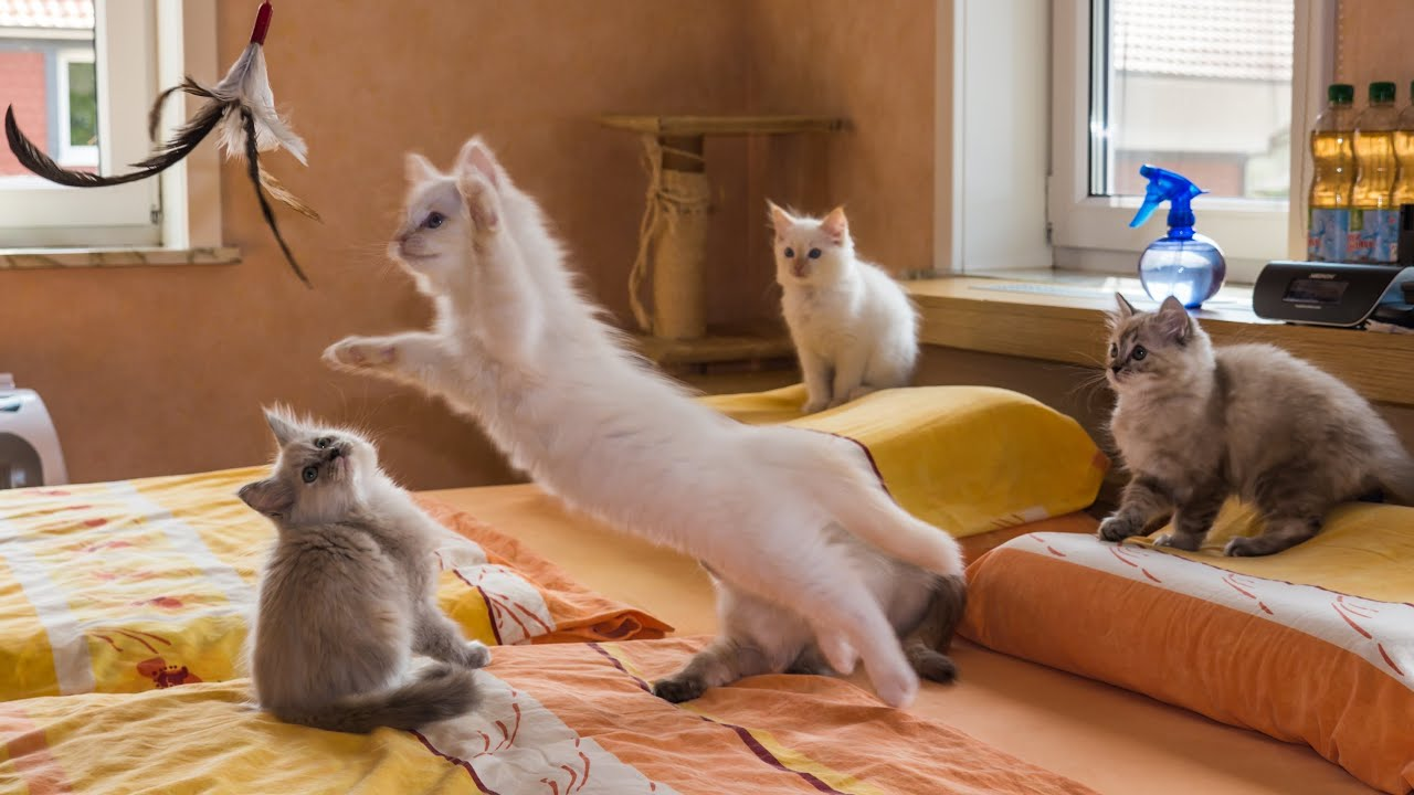 Katzenbaby Spiele