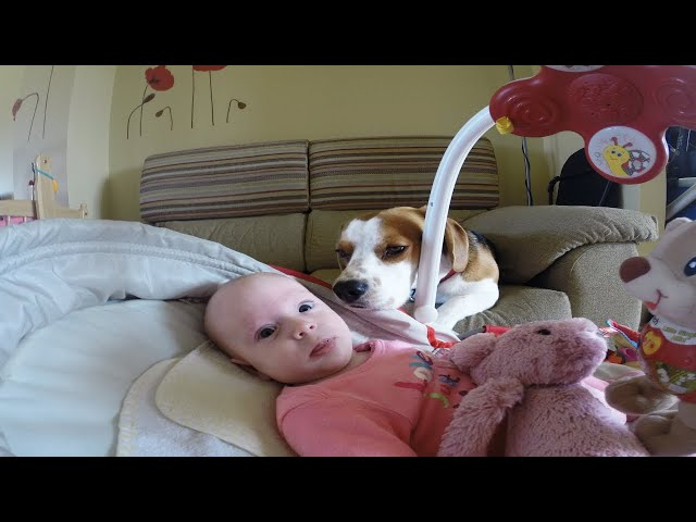 Best Dog ever helps mother change baby's diaper.