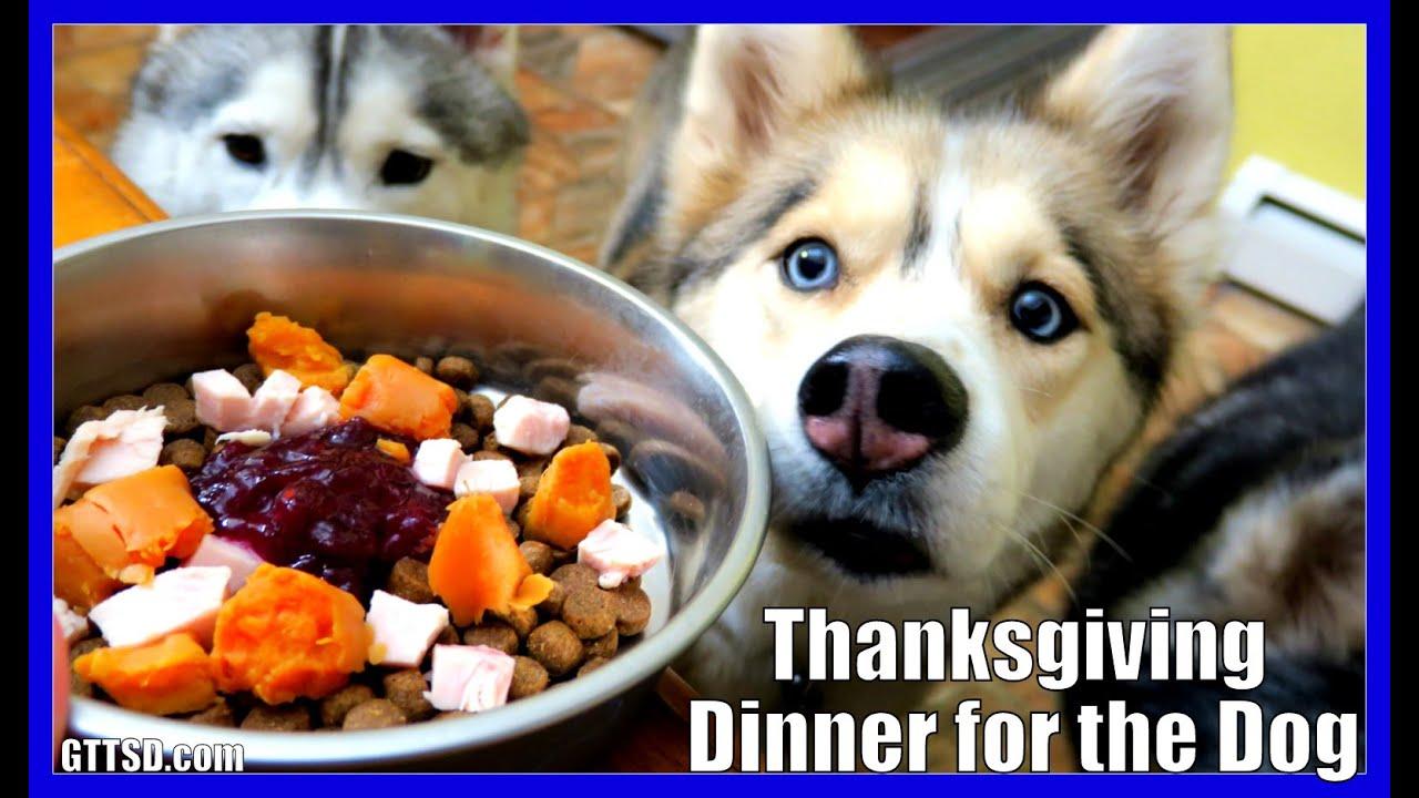 diy thanksgiving dinner for dogs diy dog treats snow. Black Bedroom Furniture Sets. Home Design Ideas