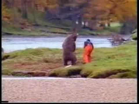 fisher attacks a bear for fish