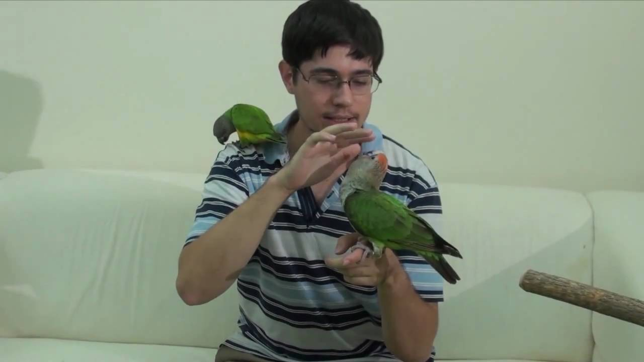 taming a parrot A bird is one of the cleverest animals you can choose as a companion pet that being the case, you want to make sure that your bird knows who is in charge (that would be you), and knows how to behave respectably in social situations most parrots can never be fully domesticated, always retaining a.