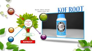 calio, NATURAL CALCIUM, Nutritional supplements, SULFUR ERECTNESS by KOF