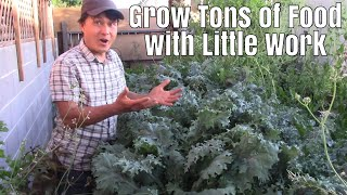 How to Grow aฑ Enormous Vegetable Garden with Very Little Work